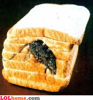 Rat in bread