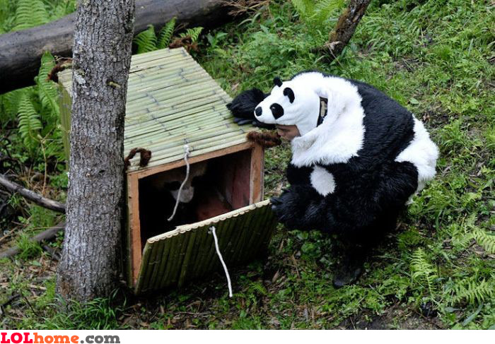 Releasing the panda