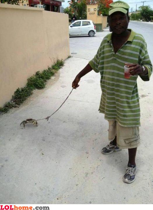 Pet crab