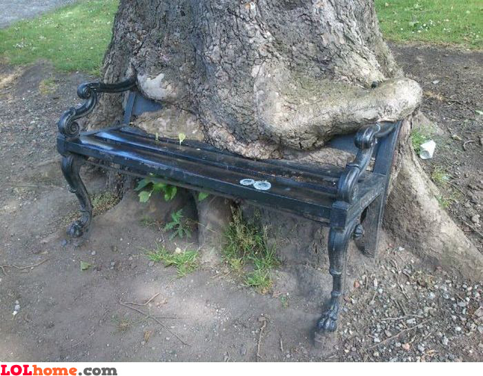 Bench eating tree
