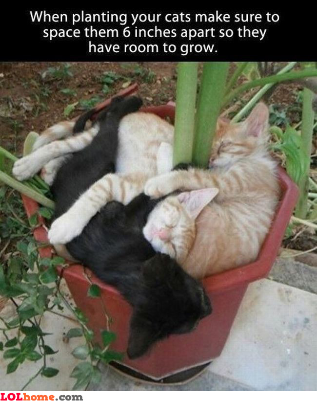 Planting cats