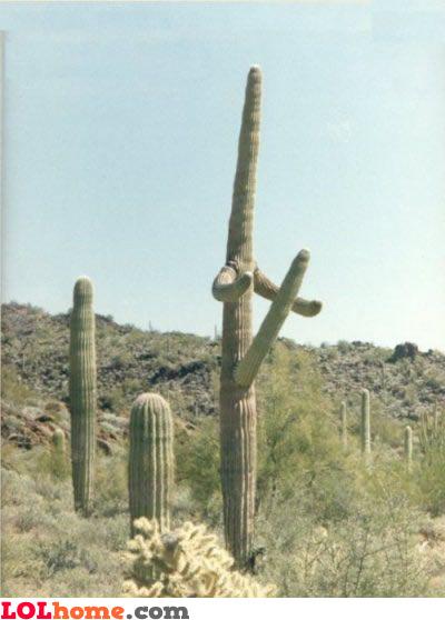 Viagra cactus