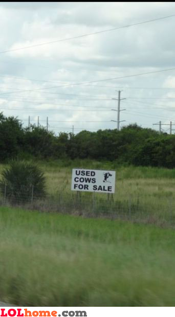 Used cows