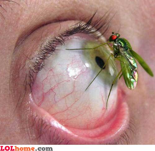 A bug in my eye
