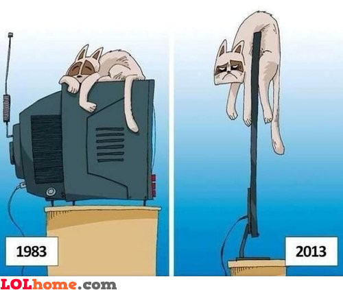 Cats hate LCD TVs