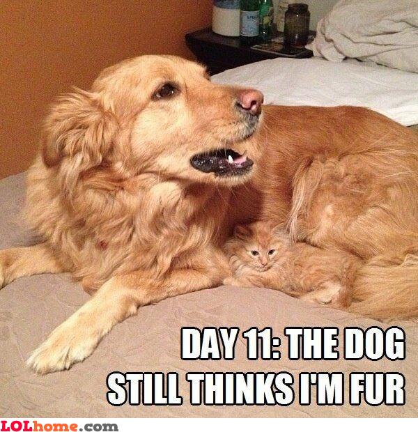I'm just fur