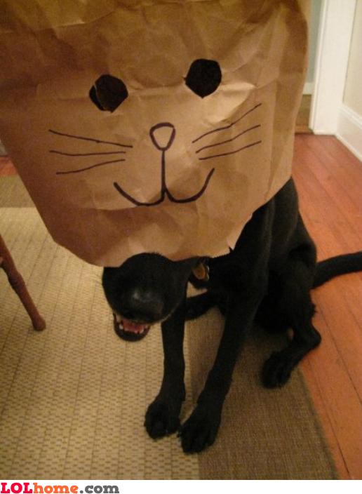 Greatest cat costume