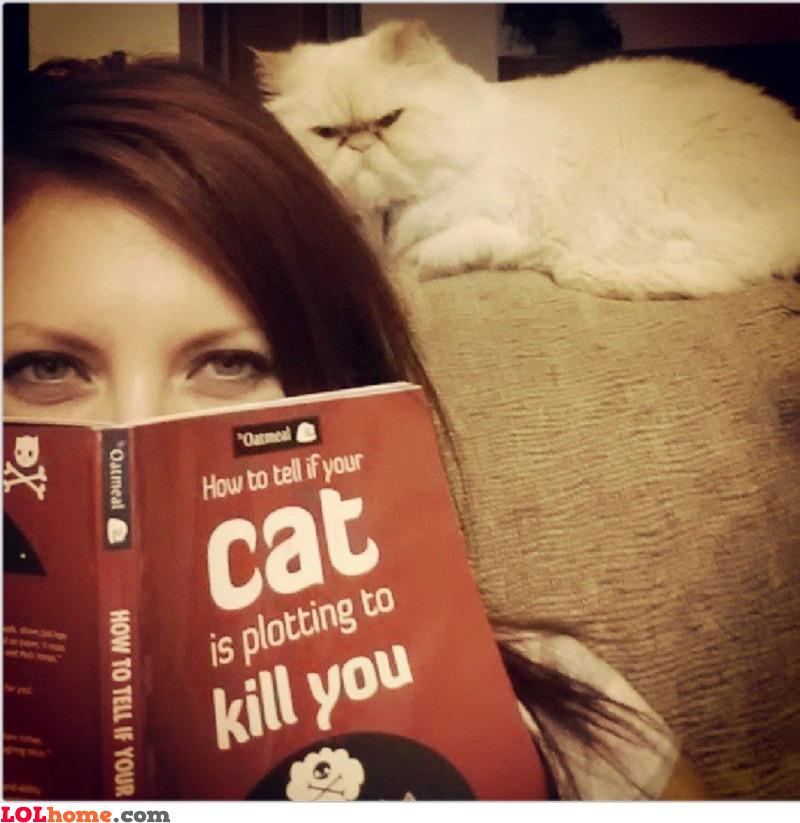 The cat is plotting