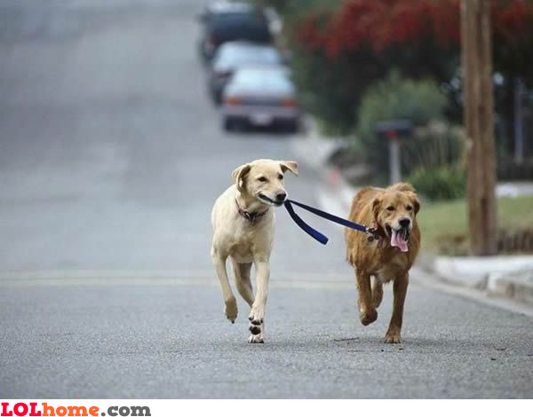 Taking the dog for a walk
