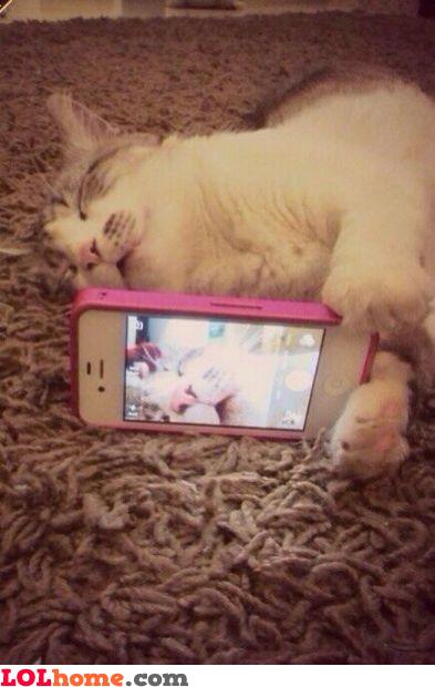 Kitty selfies