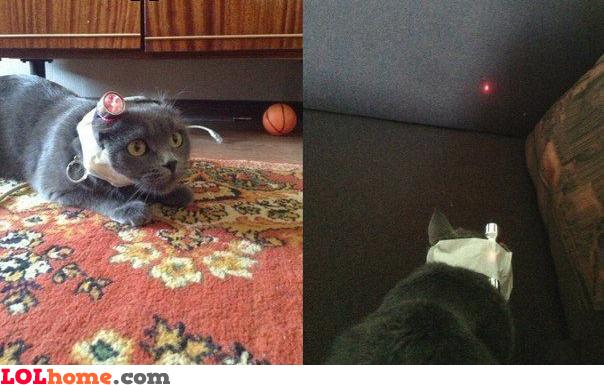 Torturing your cat