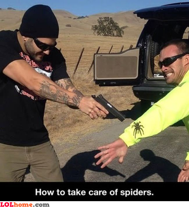 Killing spiders