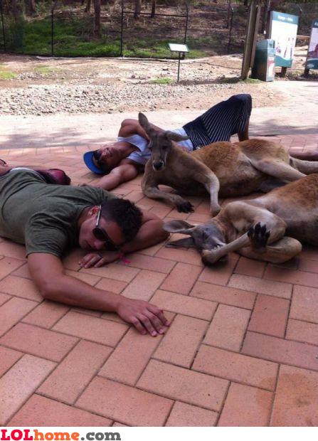 Hangover in Australia
