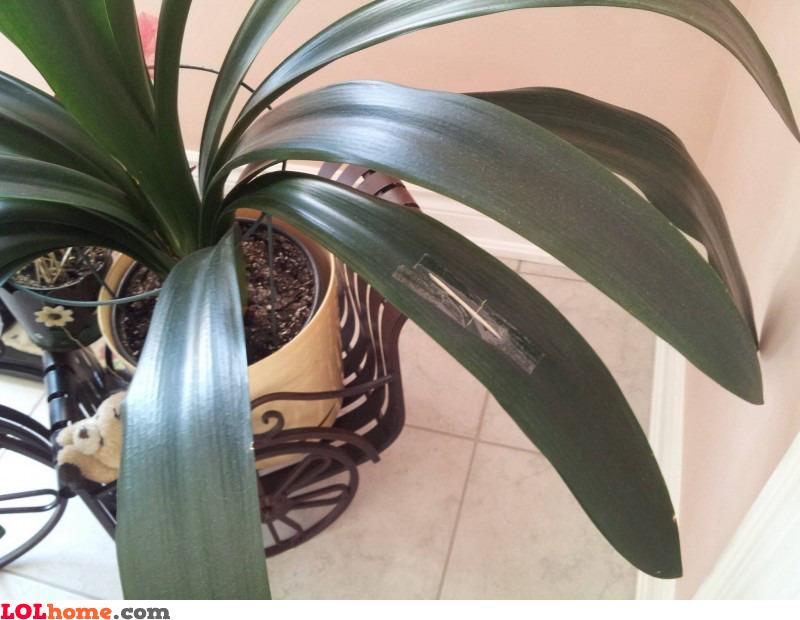 Repairing plant leafs