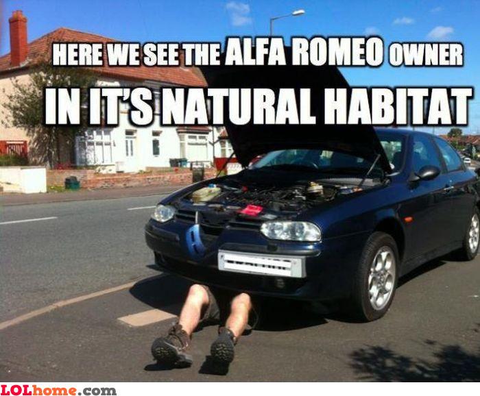 Alfa Romeo owner
