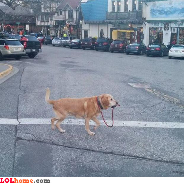 Self walking dog