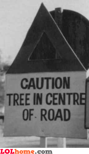 Tree in center of road
