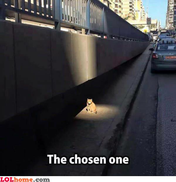 Chosen cat