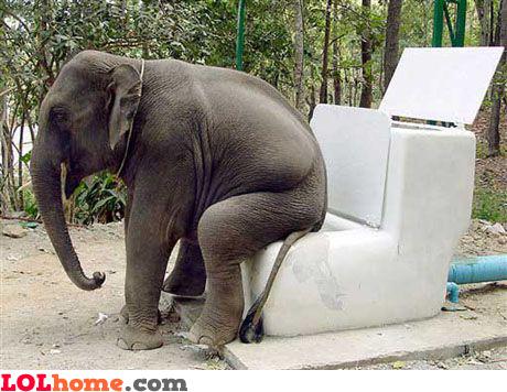 Toilet for elephants