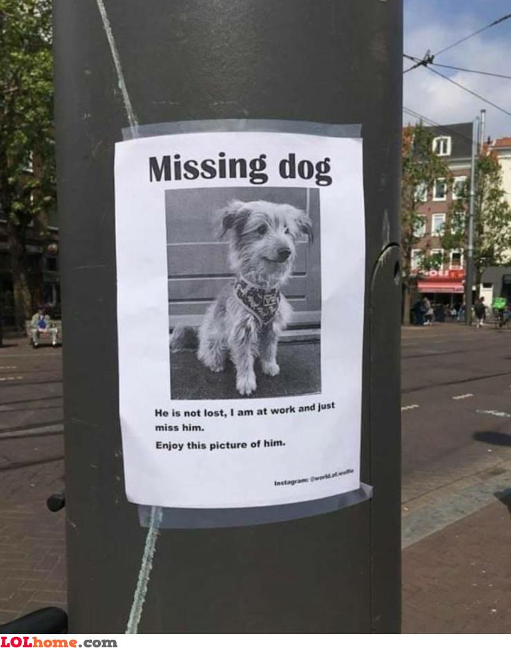 Missing my dog
