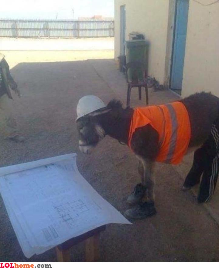 Donkey constrution