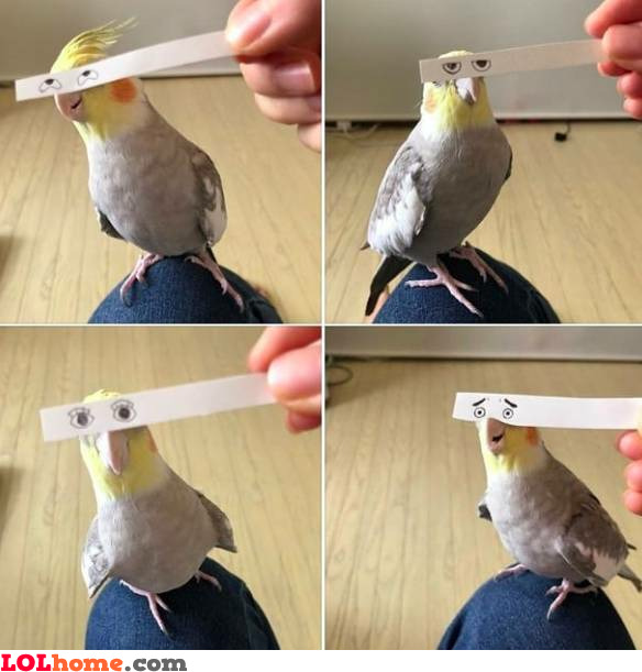 Parrot expressions