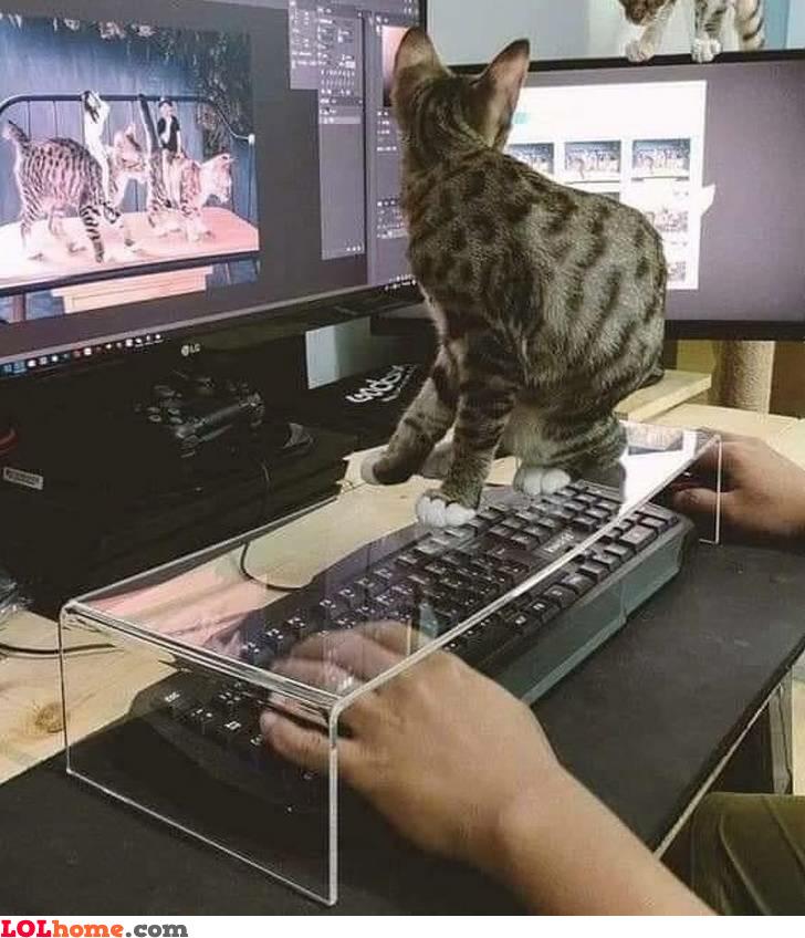 Cat on keyboard hack
