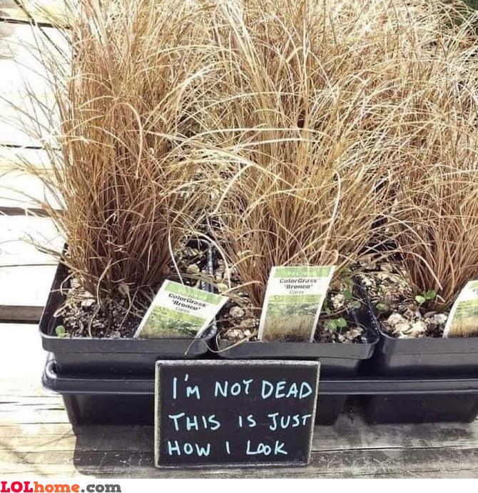 Not dead plant