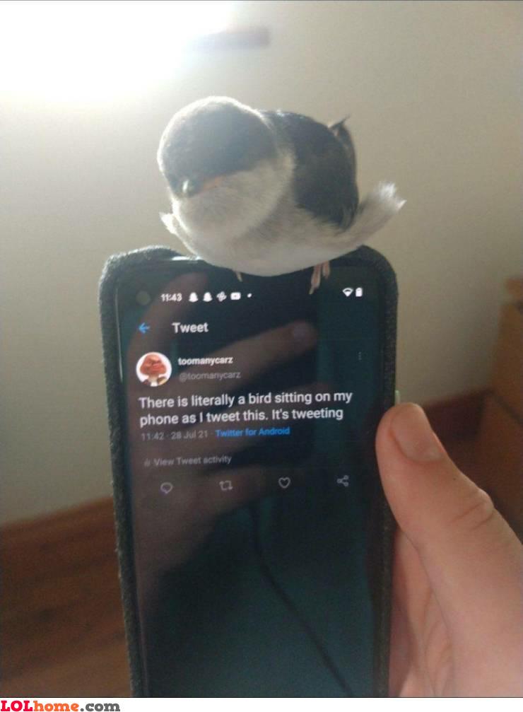 Tweeting while tweeting