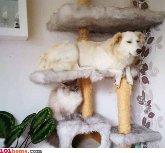 Pet stacking