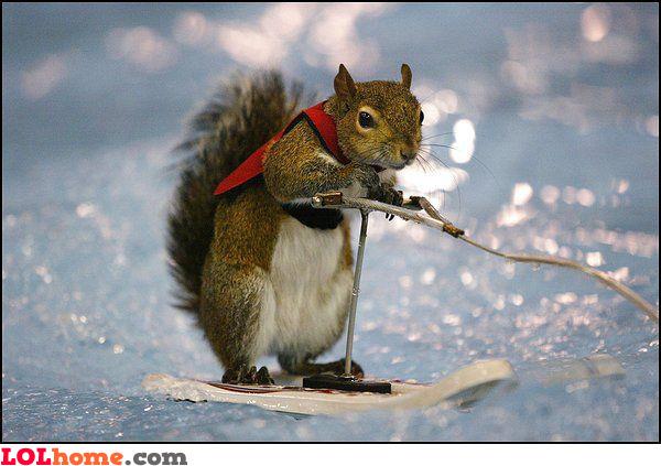 Squirrel winter sports