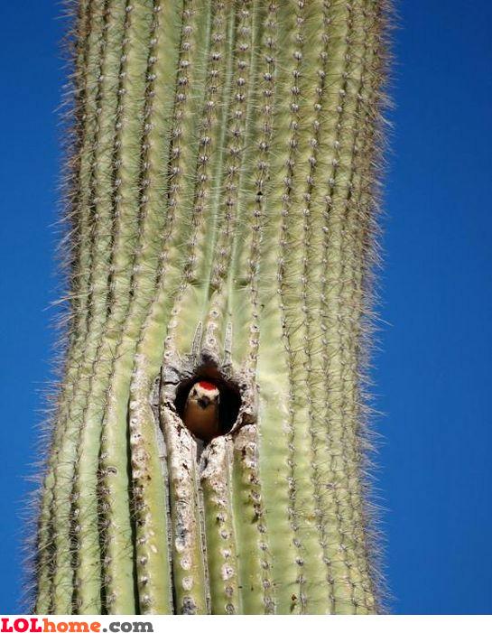 Cactus nest