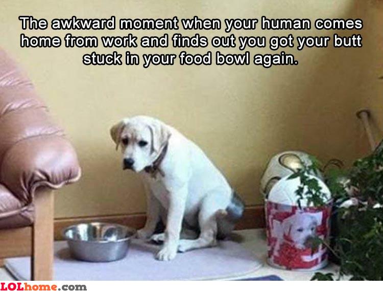 Awkward butt bowl