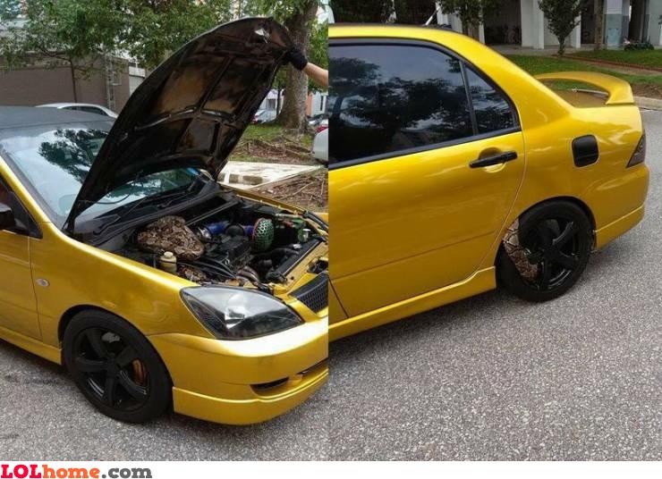 Snaky car