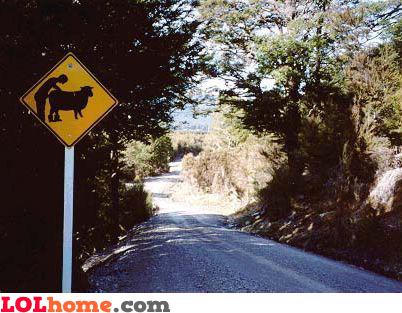 Animal sex ahead
