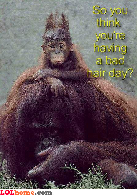 a bad hair day