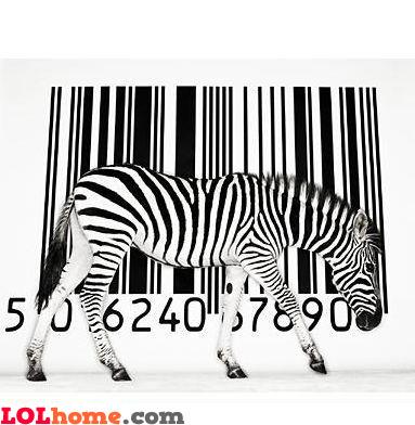Barcode Zebra