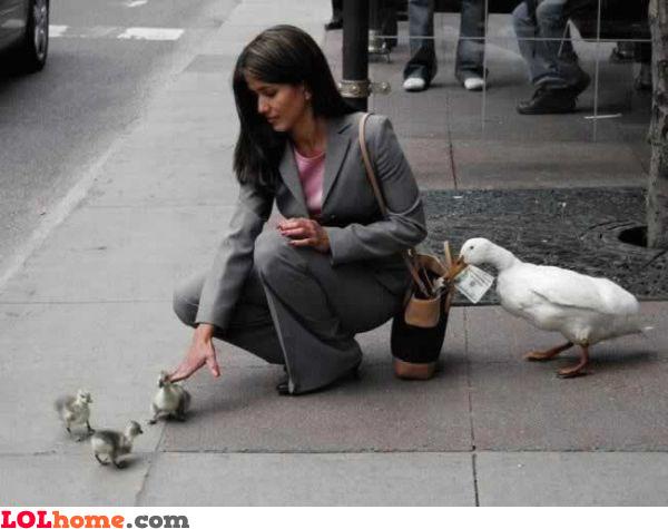 Thieving Bird