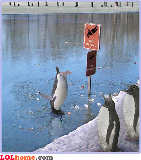No diving (penguins included)