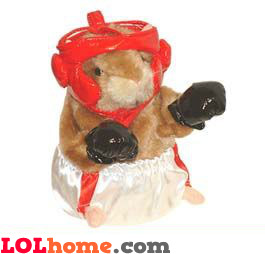 Boxing hamster