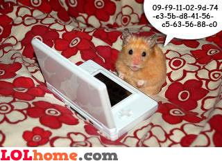 Nerdy hamster