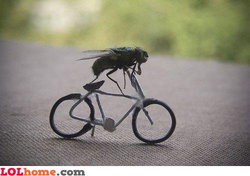 Fly biking