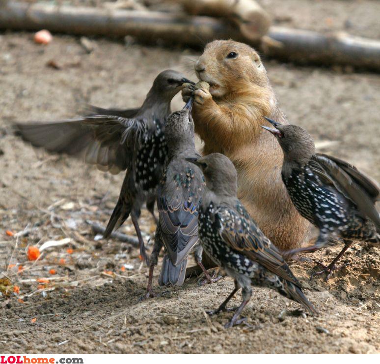 That's my nut!