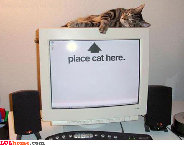 Place your cat here