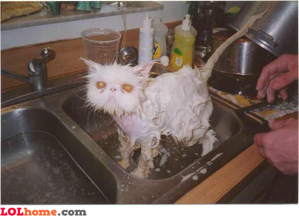 Cat bathtime