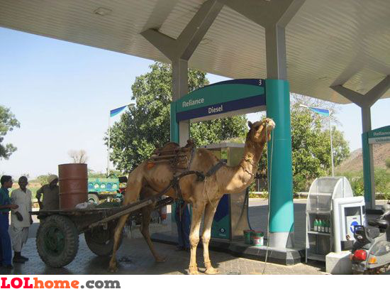 Diesel powered camel