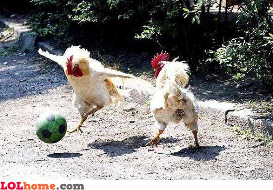 Chicken football