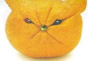 An annoying orange