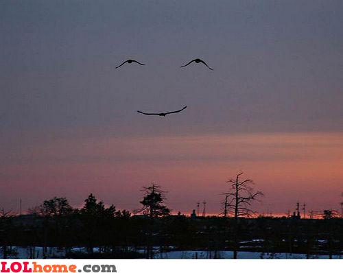 Bird smile