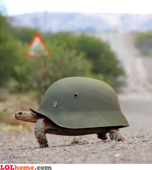 Army turtle shell